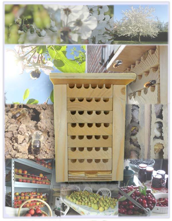 Dortoir d'abeilles avec cycle de vie