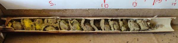 Structure interne du nid d'abeille maçonne