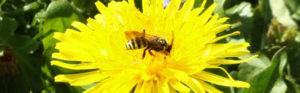 gestion-de-nectar_