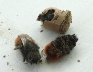 Les-abeilles-mort-de-faim-dans-les-tunnels