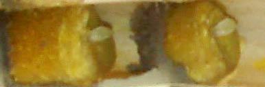 Boules de pollen et de nectar avec les œufs