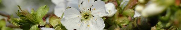 Sources du nectar dans le jardin