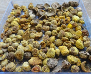 collection-de-pollen