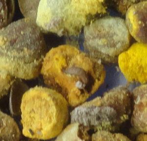 pollen+dead-larva