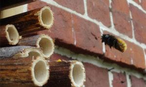 abeille-qui-cherche-son-nid