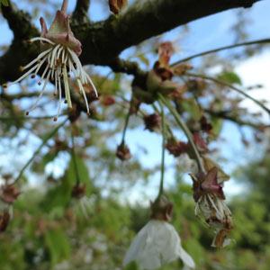_pollinisation