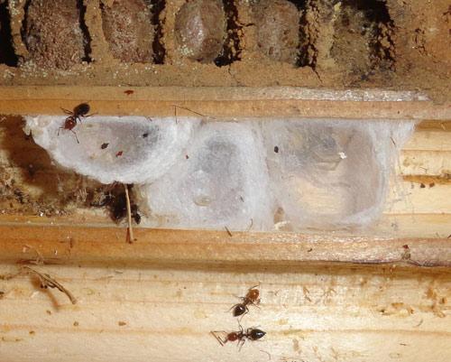 nids-d-araignee
